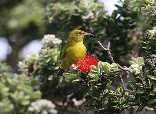 Oahu Nature Tours