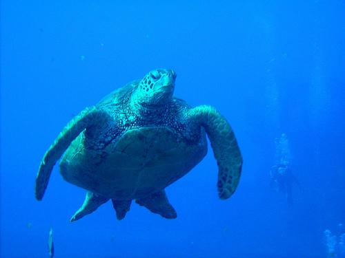 Dive Oahu Hawaii